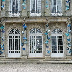 joy-de-rohan-chabot-exposition-chateau-haroue-papillons